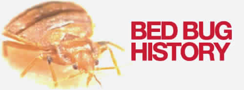 The Origins of Bed Bugs