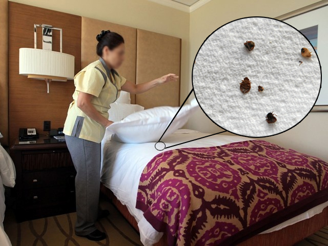 How to Avoid Bed Bugs at Hotels
