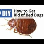 How to Get Rid Bed Bugs : 5 Minute Rule