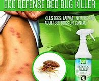 How to Treat Bed Bugs Without an Exterminator